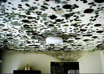 Toxic Black Mold - inspection and testing in Los Angeles, CA