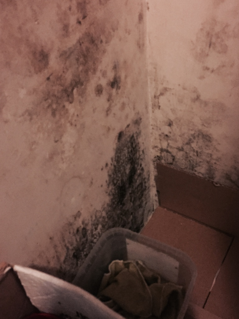 Black Mold Inspection