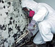 Toxic mold - inspection Hollywood Hills, Malibu, Los Angeles, CA